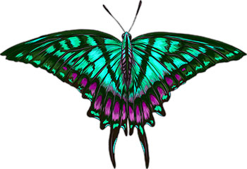 vibrant butterfly